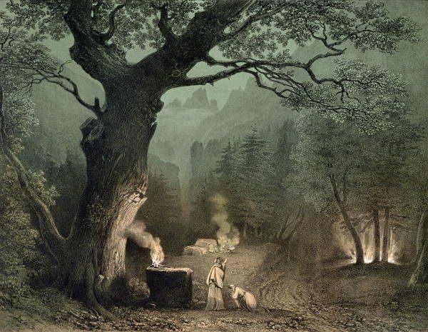 Druidi e querce