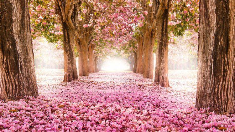 Primavera alberi in fiore