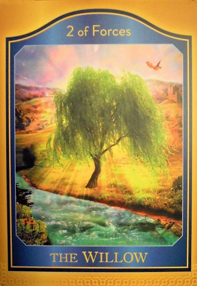 The Akashic Willow