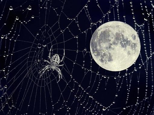 Il ragno e la luna
